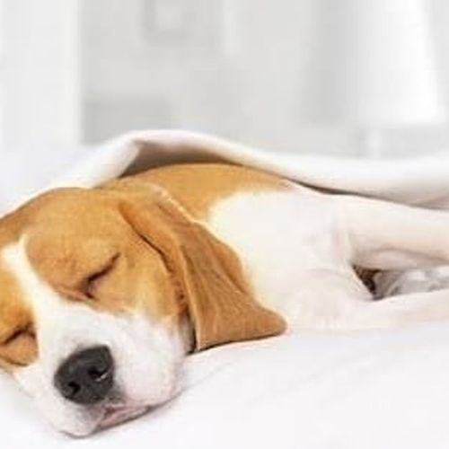 """Today I wanted a very late check out and a breakfast in bed!"" How was your Sunday morning? #hotelfabian  #wedontmindifyoustaylonger #petfriendlyhotel"