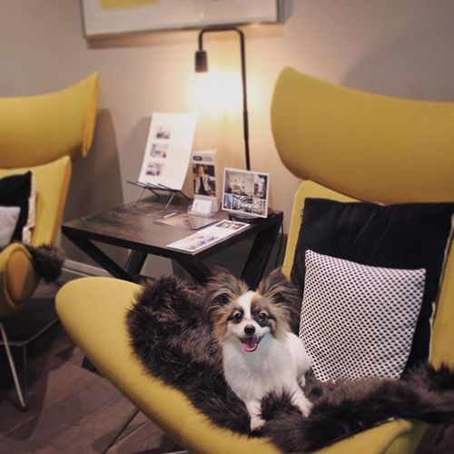 Today is Pet Day! It is time for those of us who own pets to show them how much we love them. One of the ideas for that could be to take your little friend with you to our pet-friendly hotel 😻 ⠀ •  #hotelfabian #wedontmindifyoustaylonger #nationalpetday
